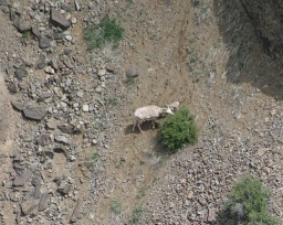 "<div><font size=""1"">Tady se pod srázem krmila horská koza s kozlátkem.</font></div>