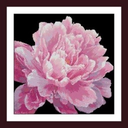 PERFECT PEONY BY MARIANNE BROOME